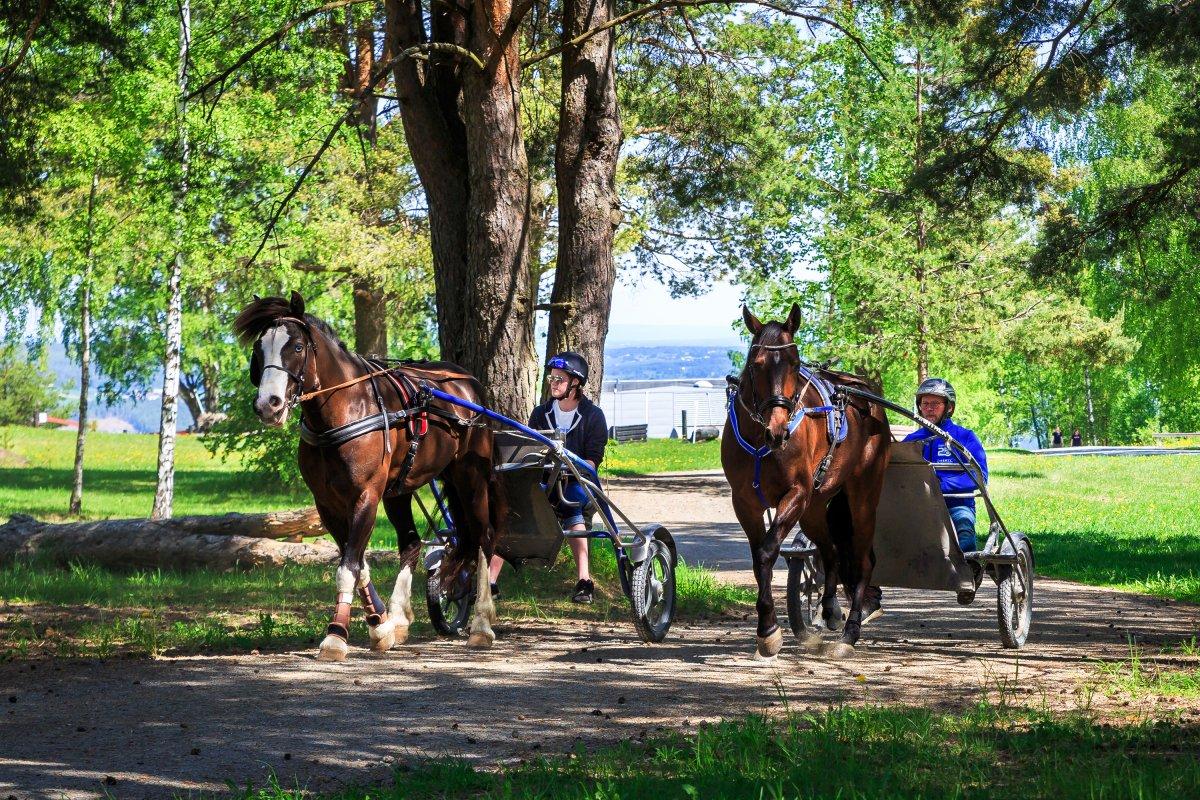 To travhester på området til Norsk Hestesenter.