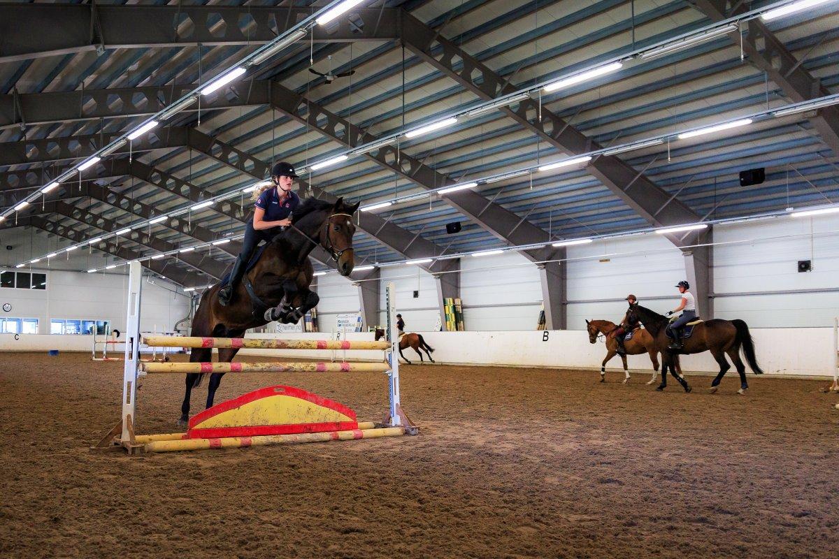 Hest hopper hinder i ridehus.