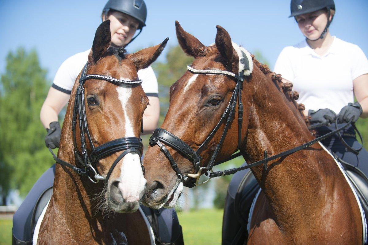 To ridelærerstudenter til hest.