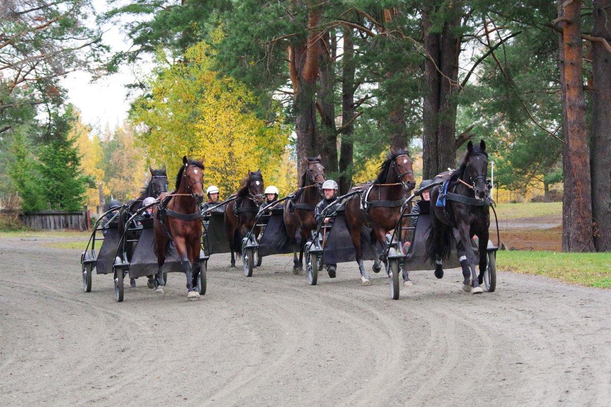Travstudenter trener hest.